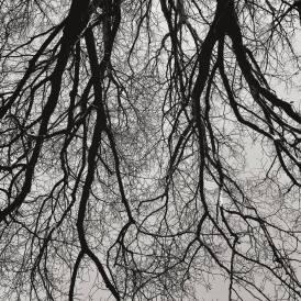 Winter's veins